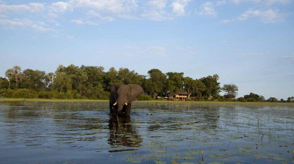 Un éléphant dans le Delta de l'Okavango