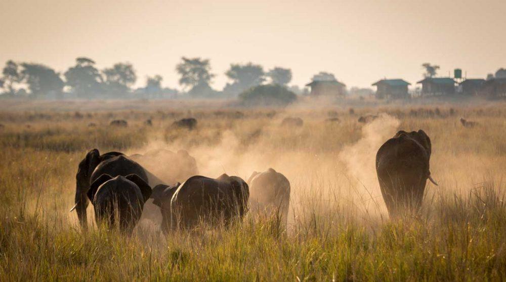 Des éléphants à Chobe