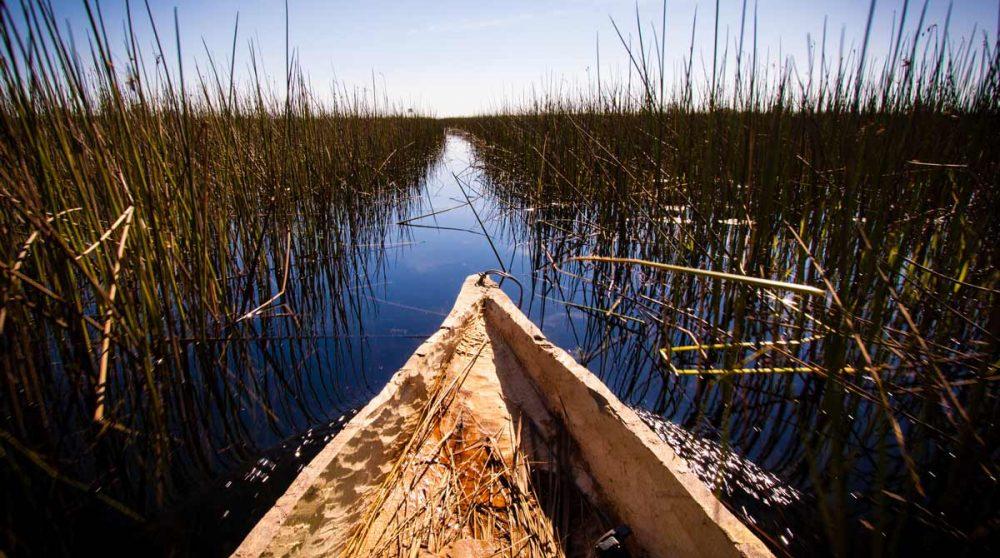 Croisière dans un mokoro dans l'Okavango