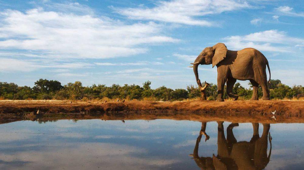 Reflet d'un éléphant dans une rivière