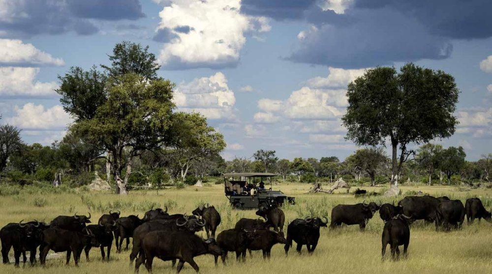 En safari dans le Delta de l'Okavango