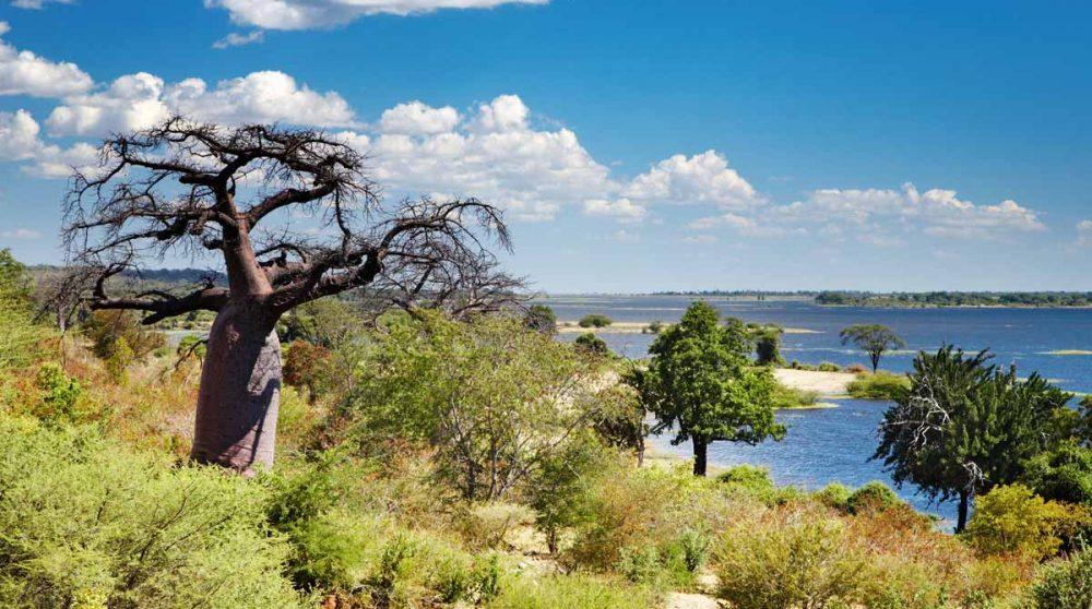 Une rivière et la nature à Chobe