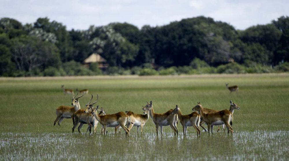 En safari