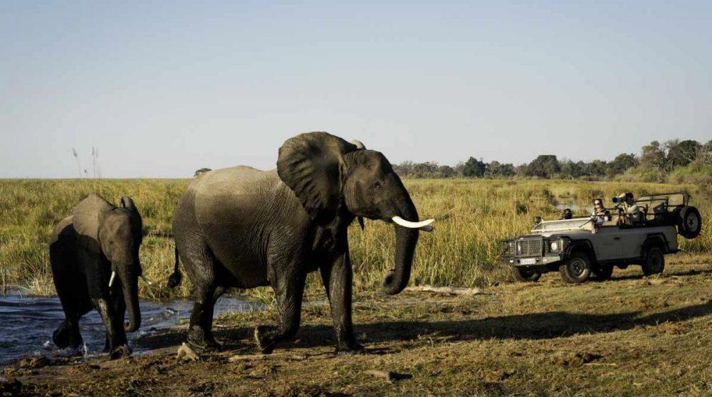 En safari face aux éléphants à DumaTau Camp