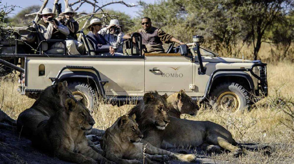 En plein safari photos