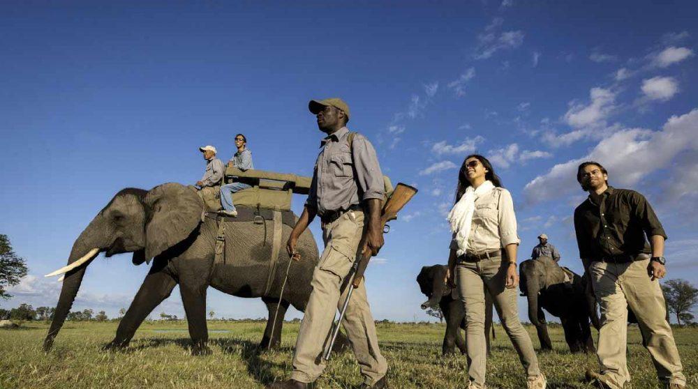 Un éléphant dans la rivière au Botswana