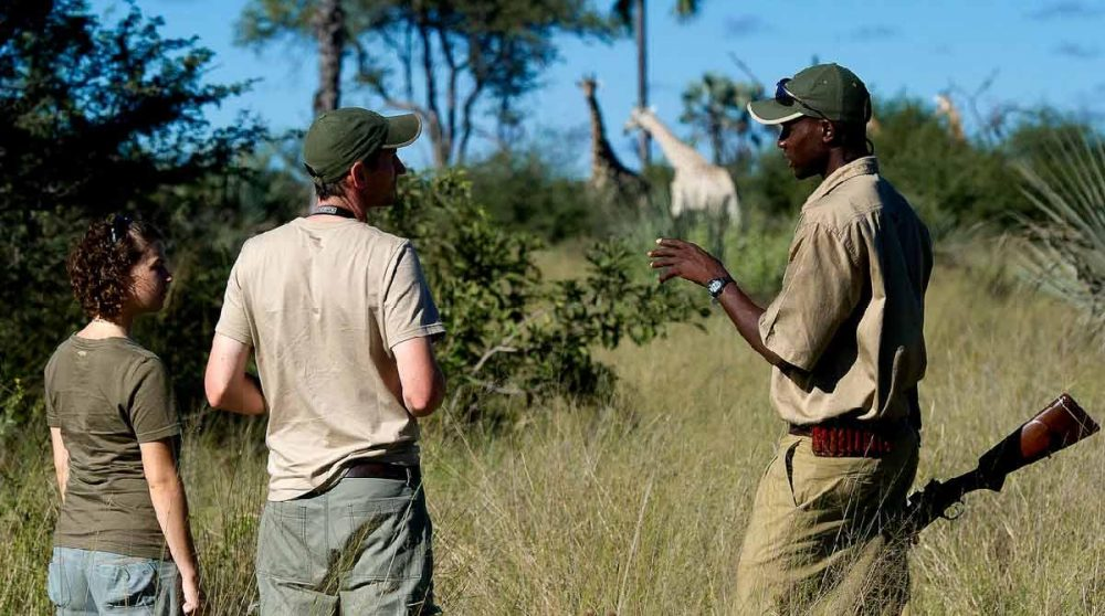 En compagnie du ranger au Botswana