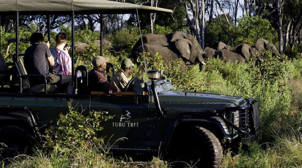 En plein safari dans le Delta de l'Okavango