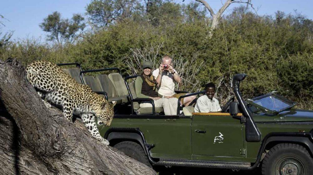 Rencontre avec un léopard