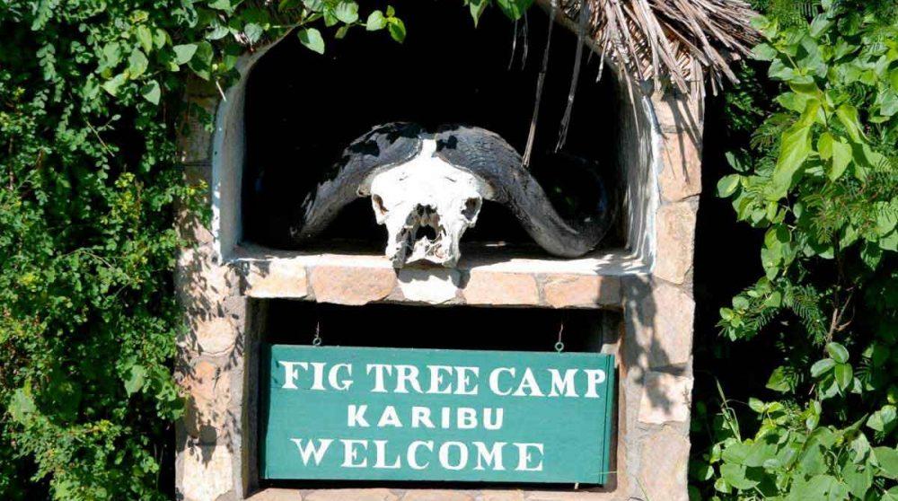 Bienvenue au Fig Tree Camp
