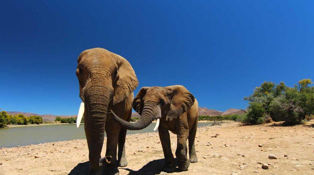 """Découvrez les """"big five"""" en safari à Inverdoorn"""