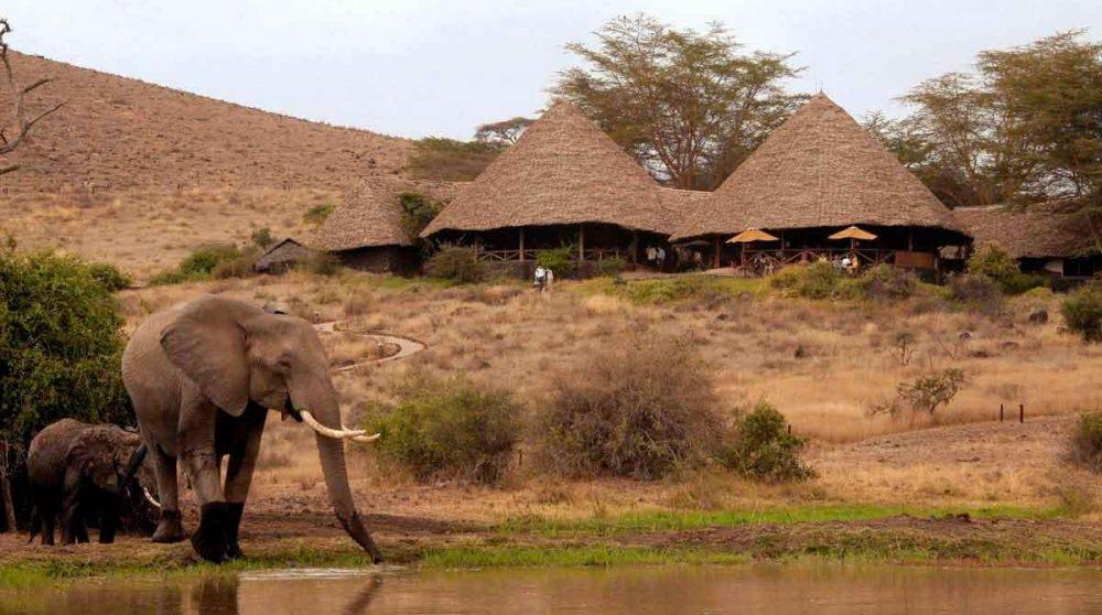 Elephants au Tortilis Camp d'Amboseli