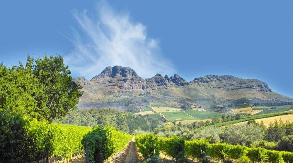 Les montagnes qui dominent la vallée viticole de Stellenbosch