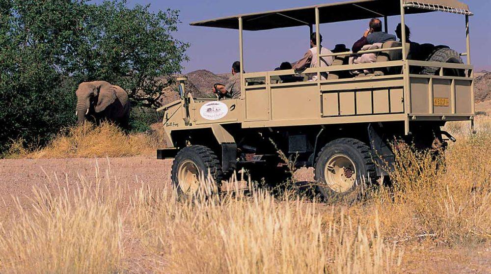 Observation d'un éléphant en safari