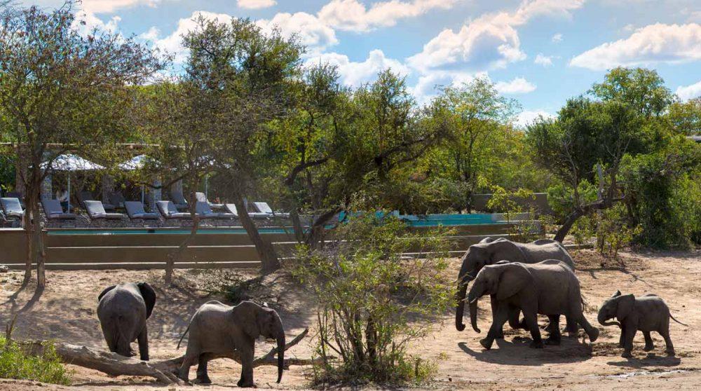La piscine et les éléphants à proximité