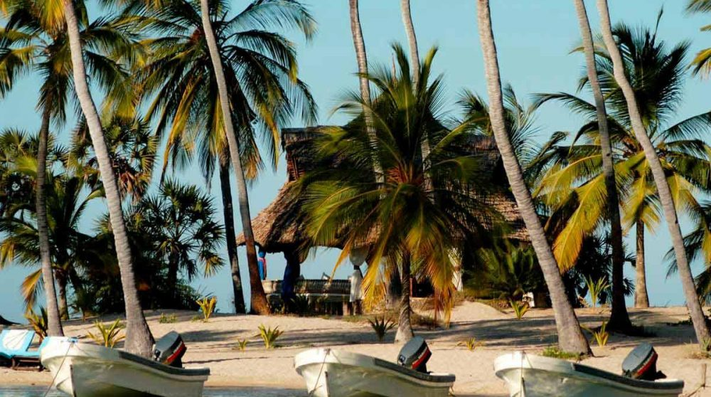 Palmiers sur l'île de Lamu