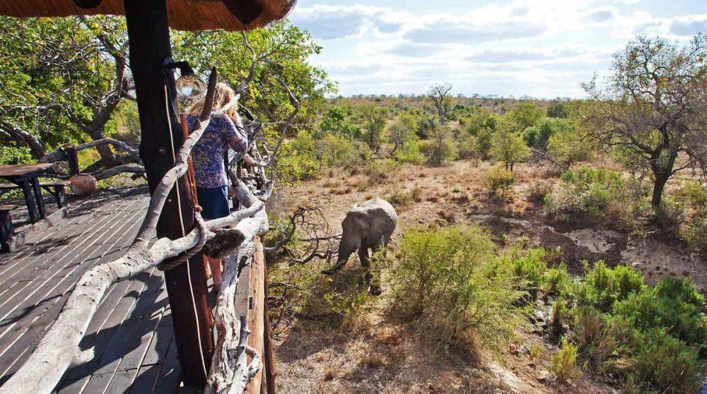 Renconter avec des éléphants