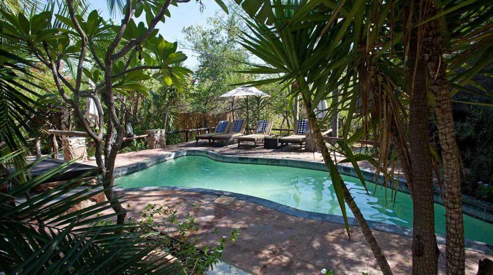 La petite piscine du lodge en Afrique du Sud