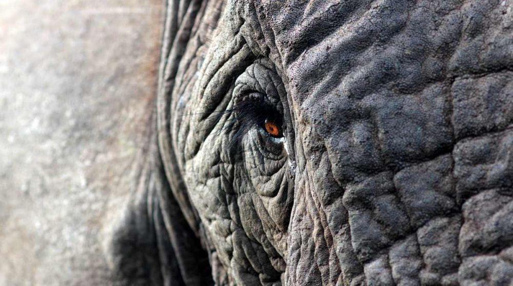 Contact rapproché avec un éléphant dans le parc Kruger