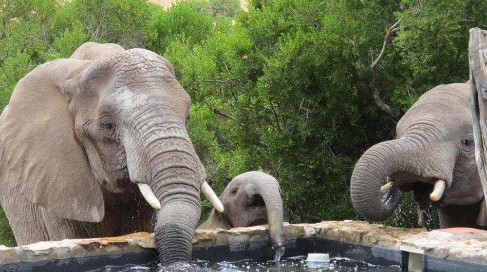 Des hôtes inattendus à la piscine !