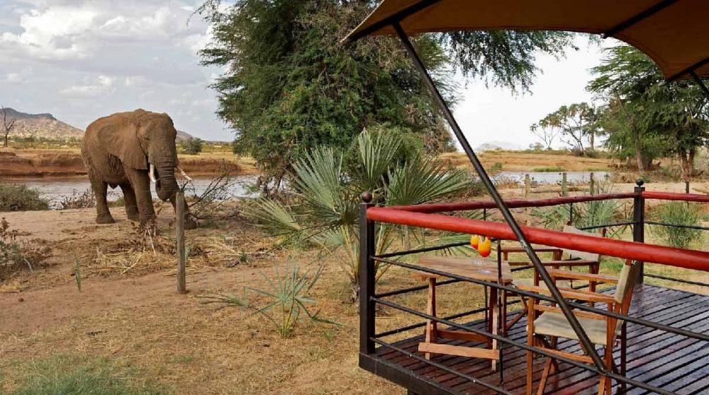 Eléphant près d'une tente