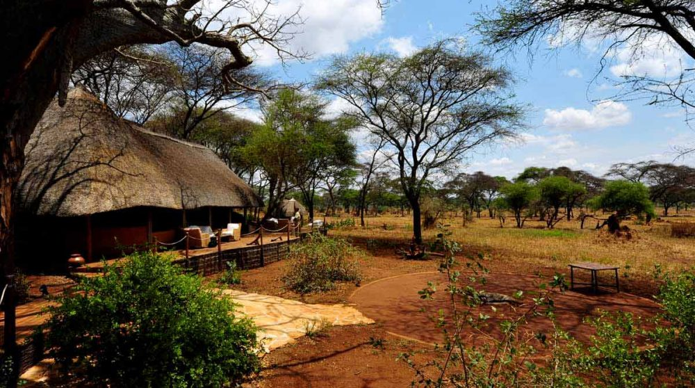 La savane dans le parc de Tarangire