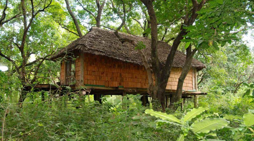 Une chambre dans les arbres en Tanzanie
