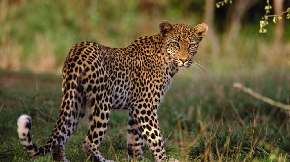 En safari à Inverdoorn près de Cape Town