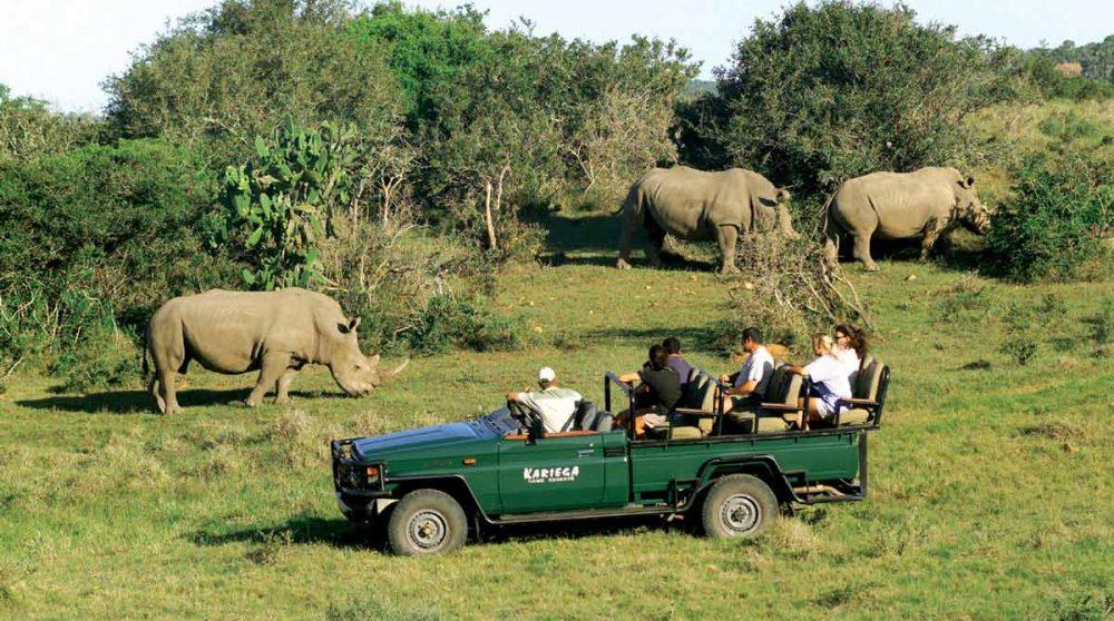 Rhinocéros lors d'un safari