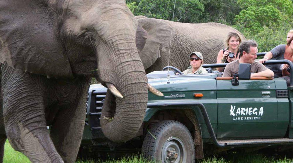 Les éléphants passent près du 4x4