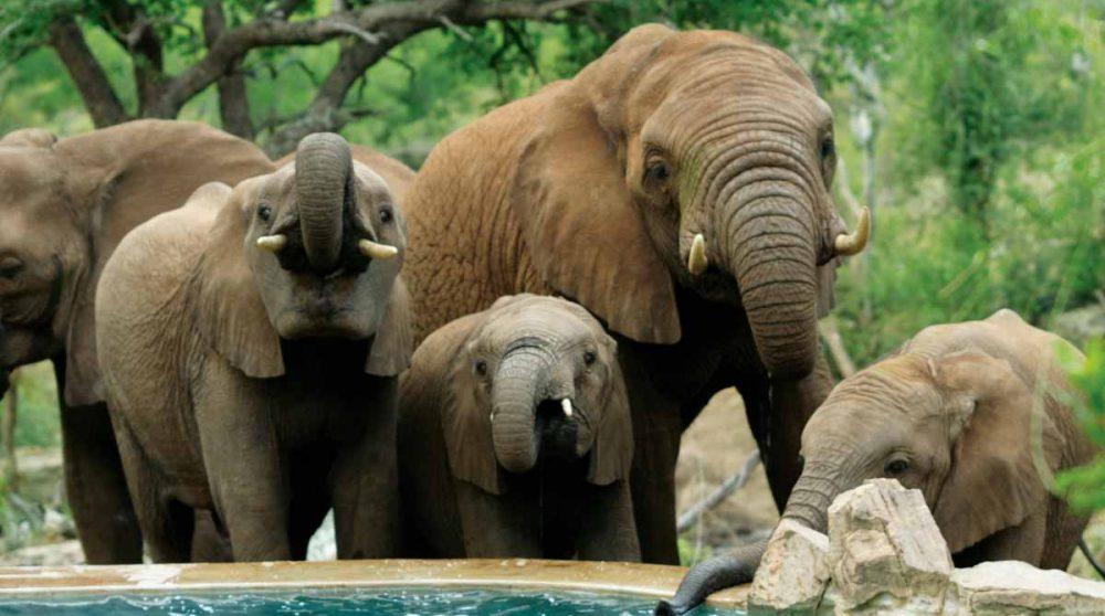 Des animaux près de l'hôtel près du Madikwe Game Reserve