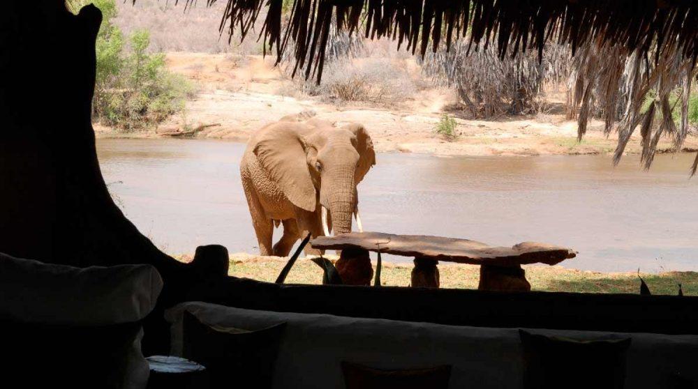 Un éléphant à Tsavo