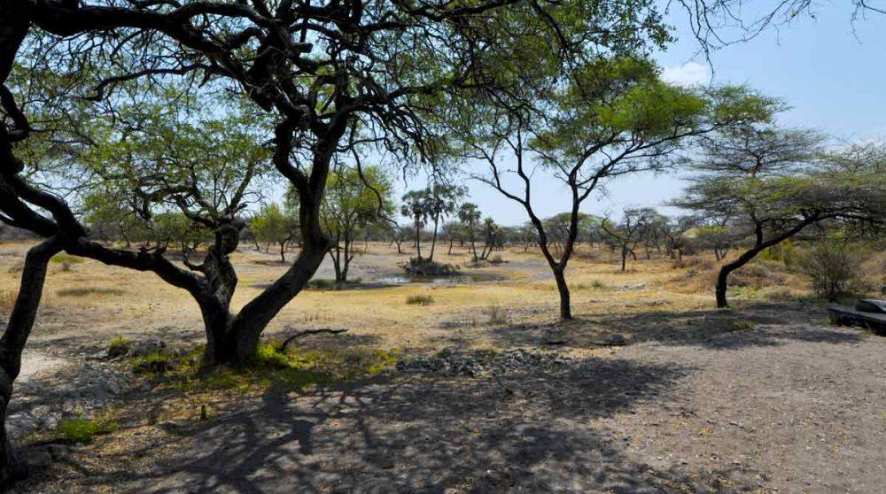 La nature à Etosha