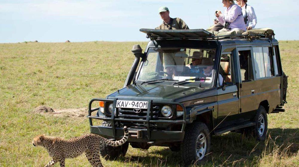 Un safari en pleine nature