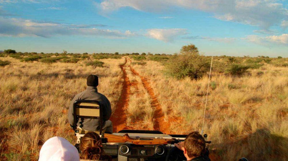 Départ en safari