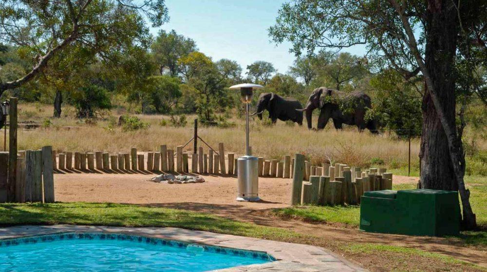 Eléphants sauvages près de la piscine du Tintswalo Manor House