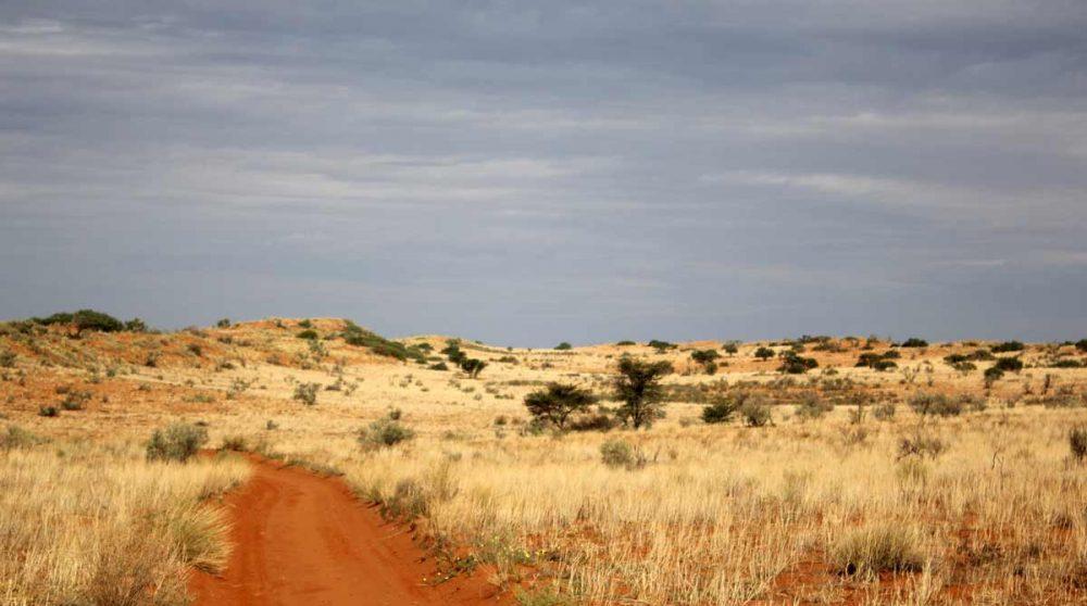 La piste de sable orange à Xaus Lodge