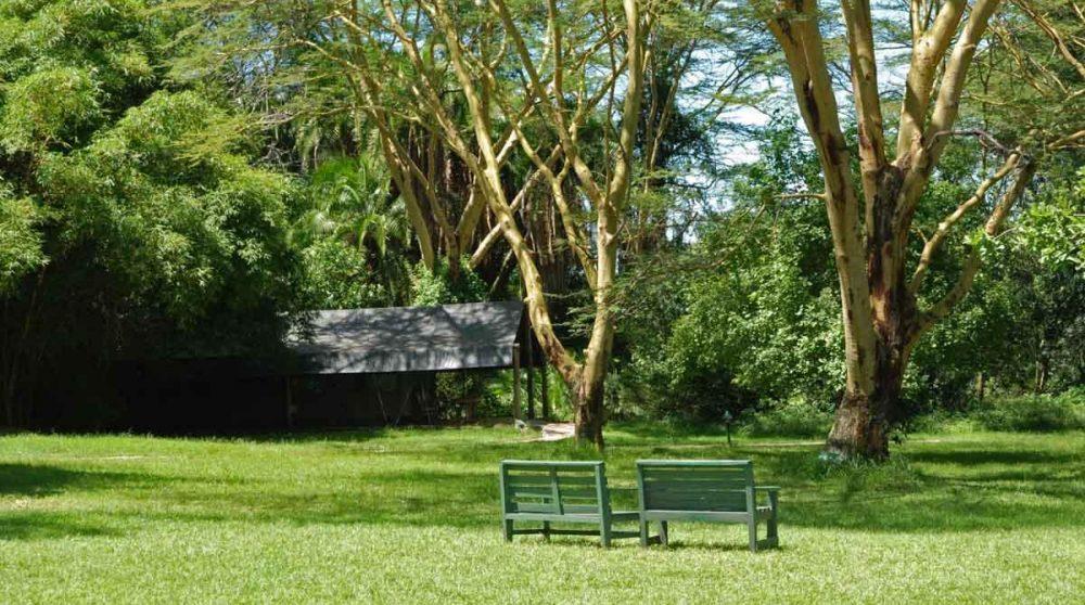 Le jardin au Kenya
