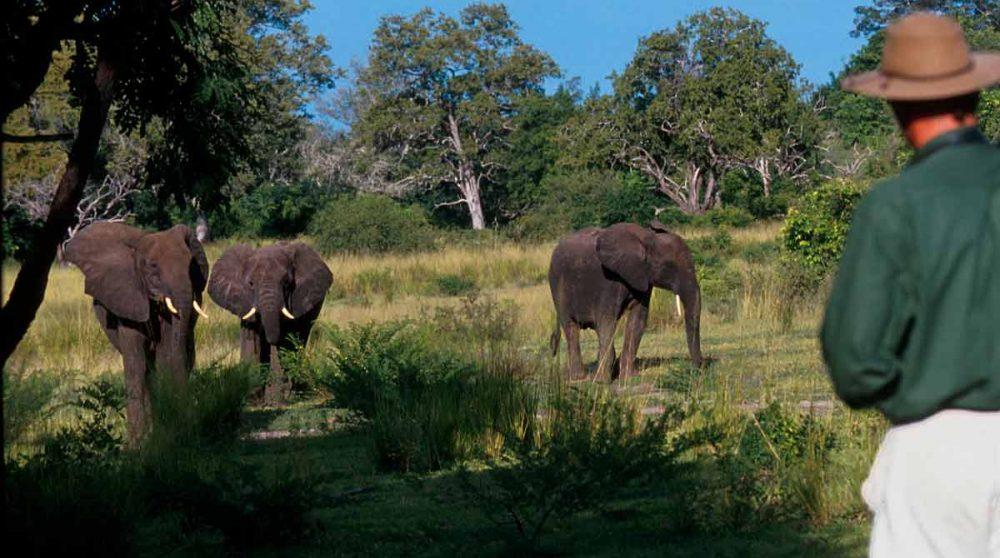 Des éléphants dans la nature