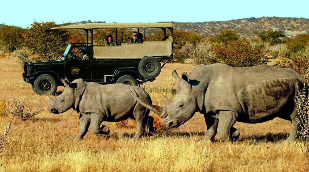 Animaux en liberté lors d'un safari