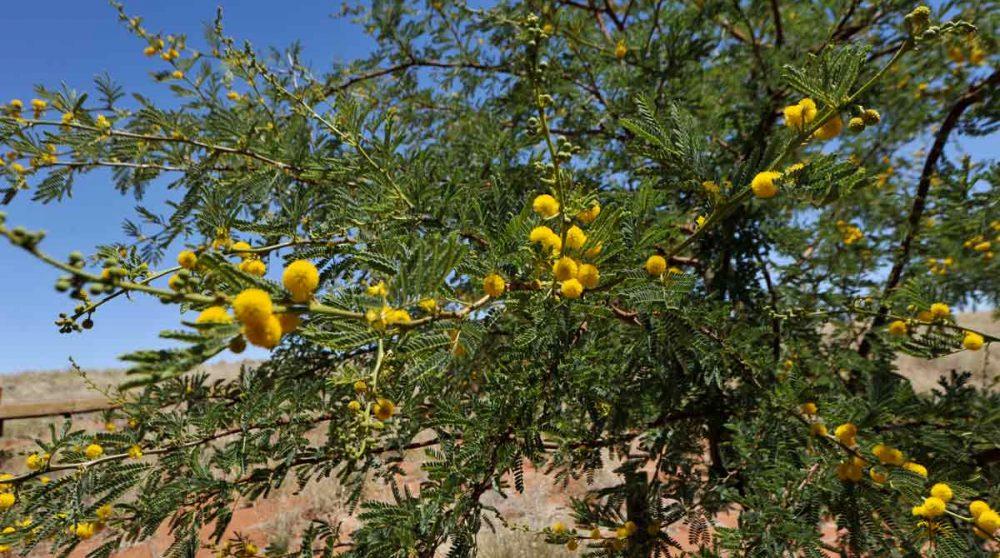 Un arbre près de la piscine en Namibie
