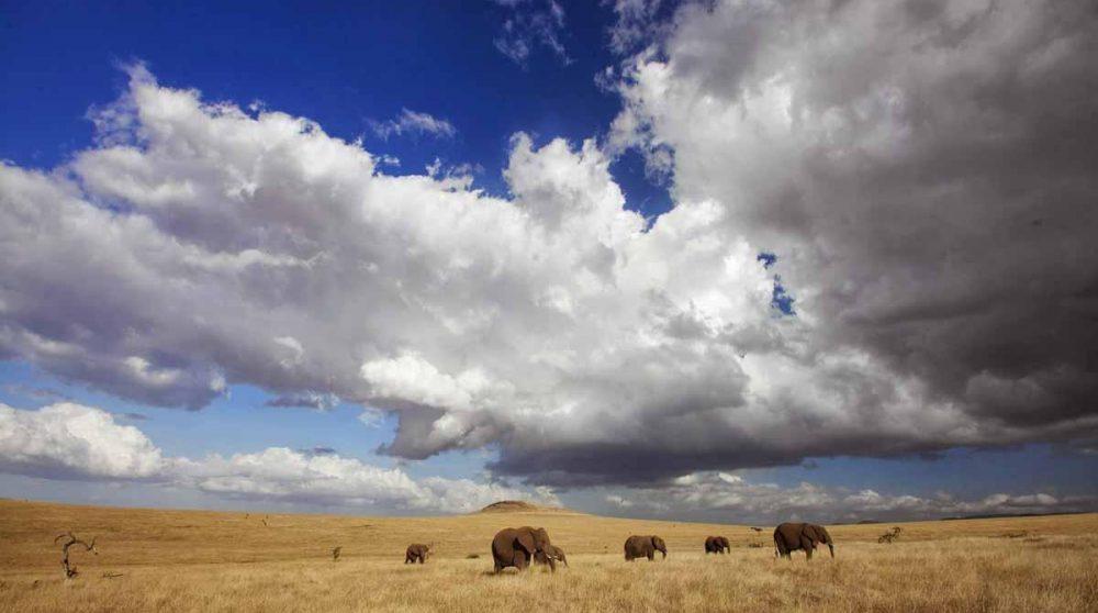 Des éléphants sous un ciel sans fin à Lewa