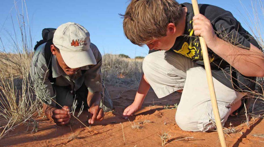 Etude des traces des insectes dans le Kalahari