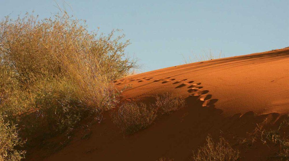 Traces sur la sable orange en Afrique du Sud