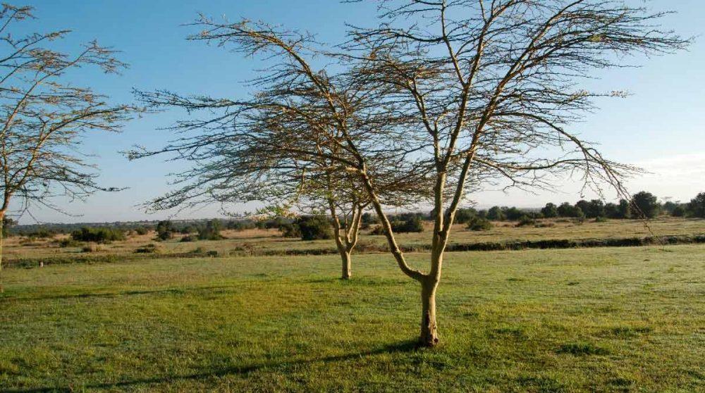 La nature environnante