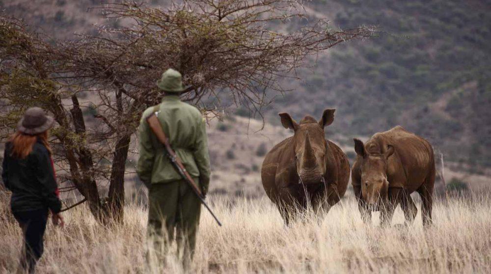 Marche à la rencontre des animaux escorté par un ranger