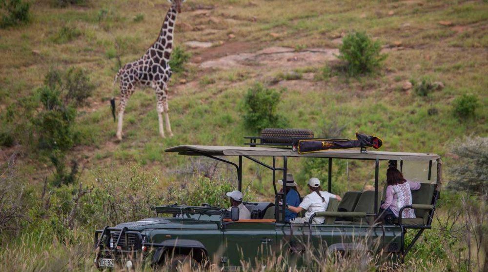 Rencontre avec les girafes à Loisaba