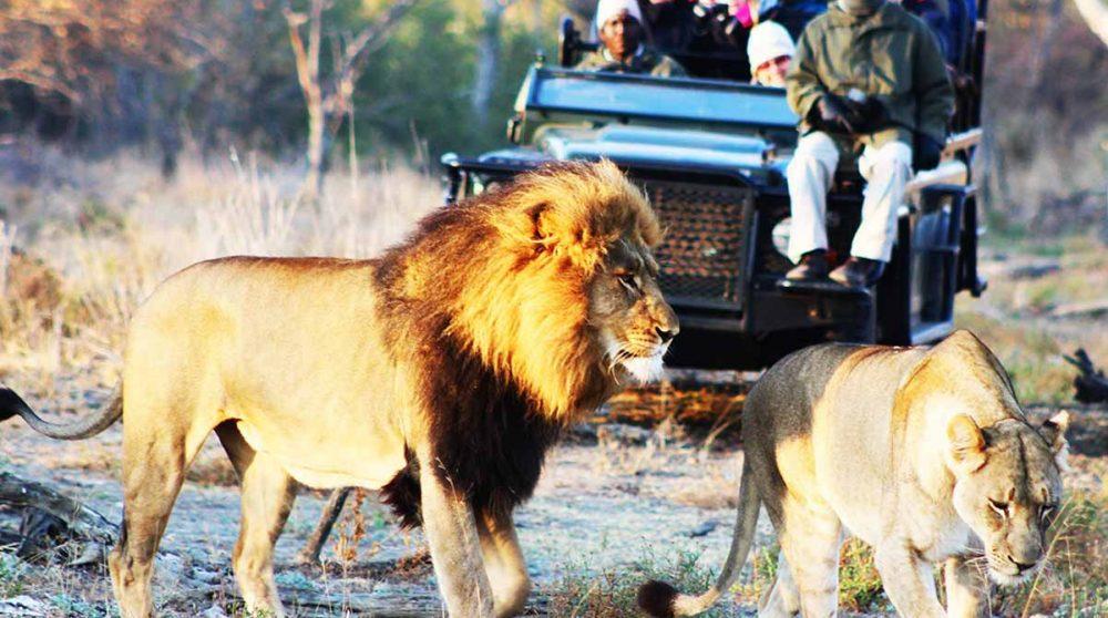 En safari en Afrique du Sud