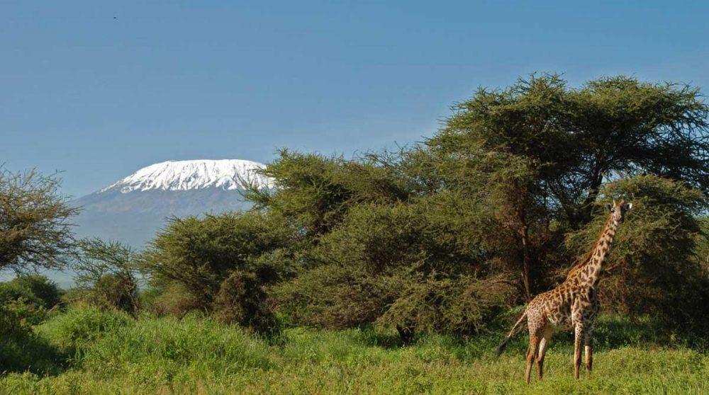 Amboseli est réputé pour ses éléphants et ses paysages
