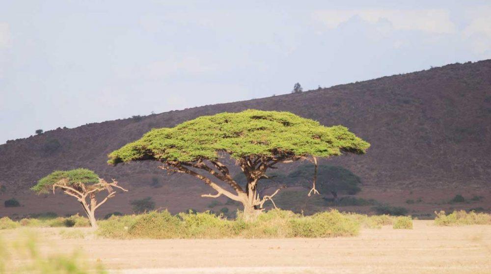 La savane à Amboseli